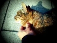 金帯猫.jpg