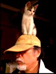 cat on the cap.jpg